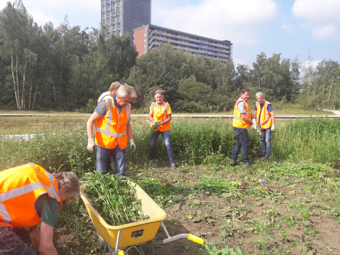 Groenvrijwilligers aan het werk; uiterst rechts Johan Dunnewijk, voorzitter en daarnaast Noud Derks, penningmeester.