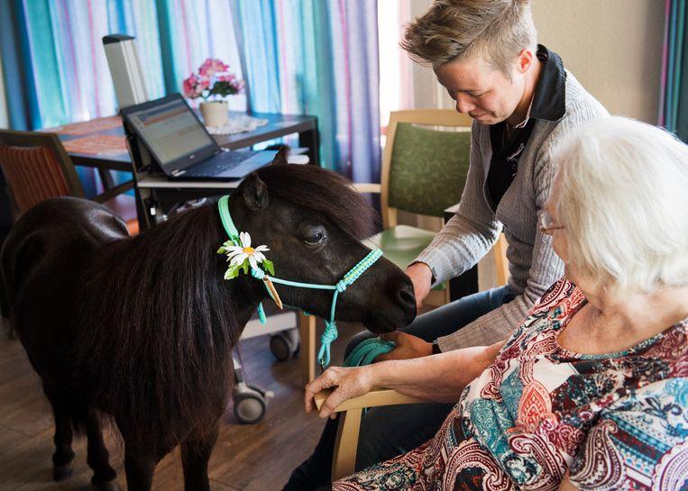 Sessie met een therapiepaardje in een zorgcentrum voor dementerende ouderen. Beeld ANP