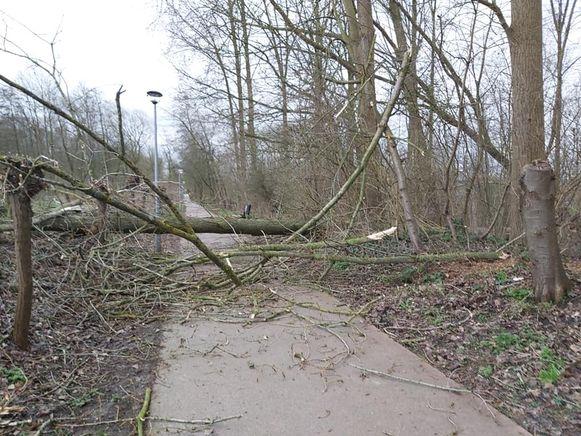 Omgewaaide boom op de oude trambaan tussen Herzele en Sint-Lievens-Houtem.