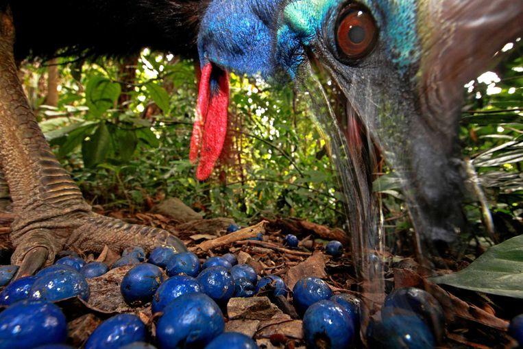 Een close-up van het indrukwekkende beest.