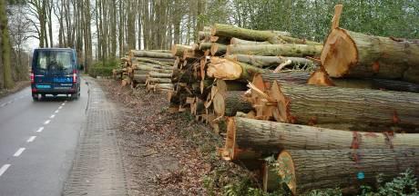 Verbazing in Saasveld: waar is het bos gebleven?