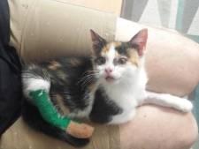 Orthopedisch onderzoek voor mishandelde Kitty