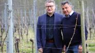 """Provincie Antwerpen onderhandelt over aankoop wijngaarddomein Ten Kapittelberg: """"Prachtig gebied tussen abdijen van Tongerlo en Averbode"""""""