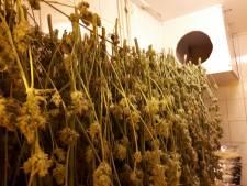 Burgemeester sluit woning in Bant na vondst 250 wietplanten
