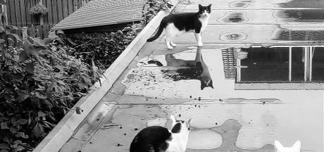 Smolders: pak kattenstront aan, schaf hondenbelasting af