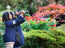 In file door nog te groene Japanse Tuin