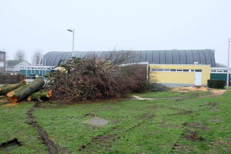 De kap van de bomen werd in december 2018 stilgelegd na bewonersprotest.