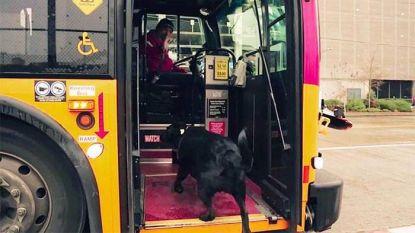 Hond neemt dagelijks zelfstandig bus om in park te spelen