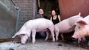 Martin Thus met echtgenote bij hun varkens.