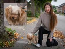Waarom houdt Patricia hondje Bella zo strak? 'Iemand zei dat ze geluk had bij ons te zijn'