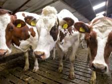 Steeds minder boeren in Drenthe en Groningen