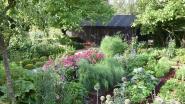 Drie bijzondere tuinen bezoeken en goed doel steunen