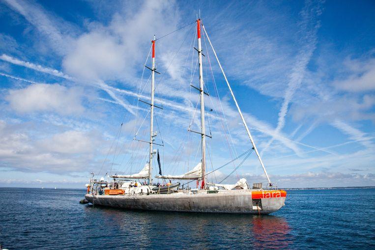 Het zeilschip Tara verzamelde drie jaar lang stalen van plankton en deze schat aan informatie stelt wetenschappers in staat het leven in de oceanen te ontrafelen.