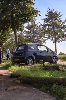 Boom in Rijen valt om door harde klap van auto, bestuurder raakt lichtgewond