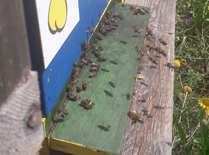 Bijenkasten in de stal van ziekenhuis ZGT Almelo.