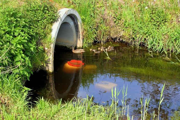 Drugsvaten in het stroompje. Foto Toby de Kort/ De Kort Media