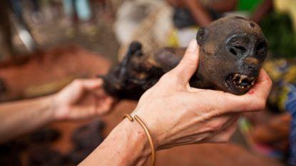 """Volksgezondheid onderzoekt import bushmeat: """"Maar straffen opleggen is moeilijk"""""""