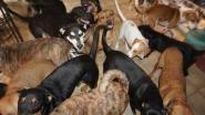 Vrouw neemt 97 dakloze honden in huis om diertjes te redden van orkaan Dorian