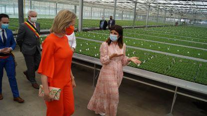 """Koningin bezoekt chrysantenkweker Gediflora: """"Dit is een hart onder de riem voor de hele sector"""""""