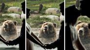 Beer kijkt wel héél verbouwereerd tijdens trouwpartij in zoo
