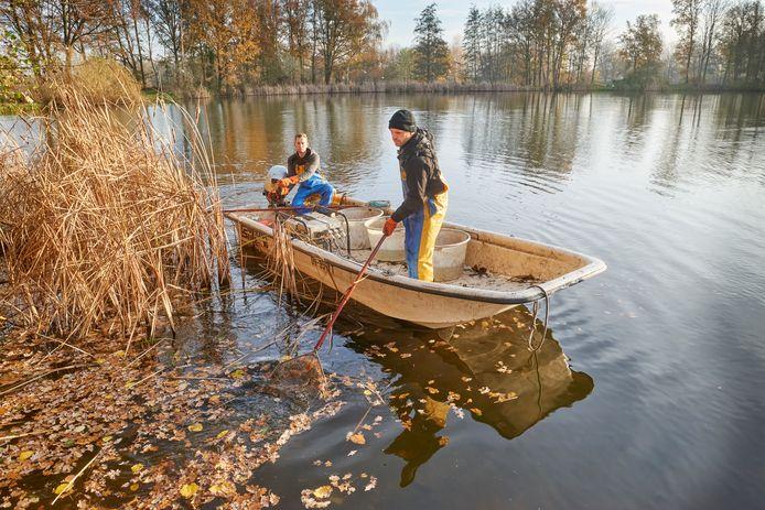 Coen Burger en Martijn Heijboer vangen de Hamelspoel in Herpen leeg om de vissen over te zetten naar zuurstofrijker water.