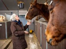 Hartenkreet van Rika uit Dalmsholte: 'Deze paarden mogen niet naar de slacht'