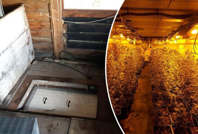 In een schuur bij een woning in Hulshorst is een enorme ondergrondse hennepkwekerij ontdekt.