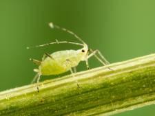 Ook planten worden met virussen besmet: 'Er bestaat geen virusvrije tuin'