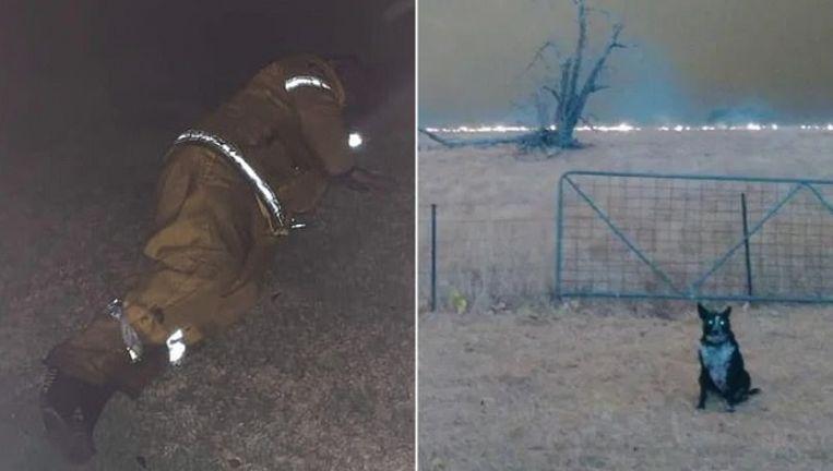 Een brandweerman probeert wat te slapen in een voortuin en moet zachtjes huilen. En hond Patsy redde een kudde schapen.