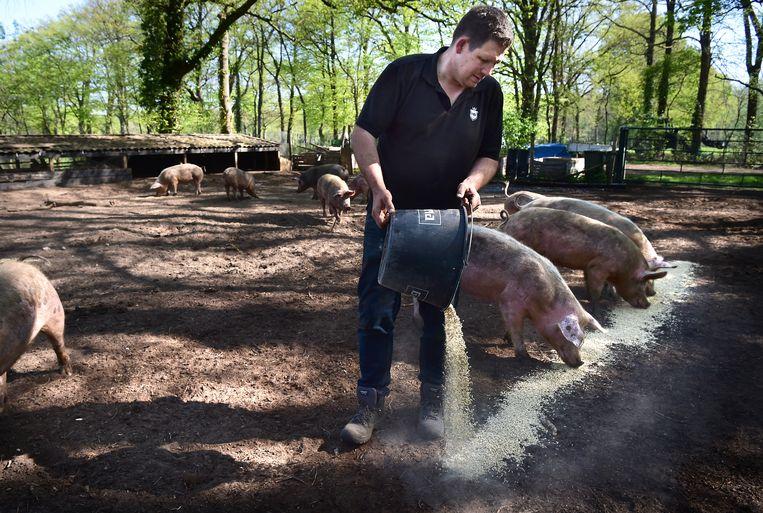 Boer Geert voert de varkens. Beeld Marcel van den Bergh