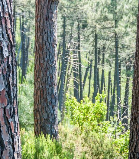 'Rooien houdt Bos van Erasmus juist gezond'