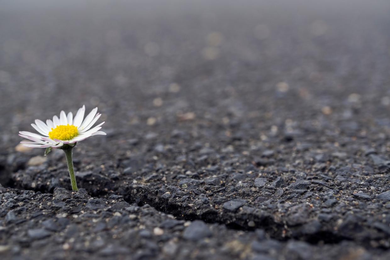 De mensen die al mindful leven zullen de komende tijd misschien nog 'mindfuller' worden.