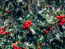 Zo creëer je simpel kerstsfeer in je tuin