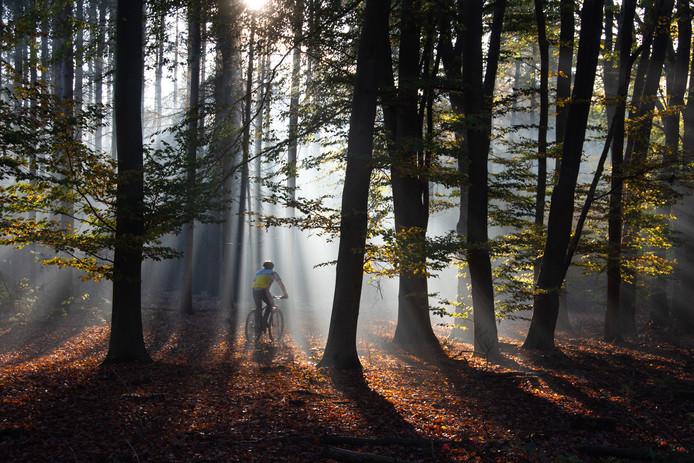 Mountainbiker in het bos bij de Pannehoef.
