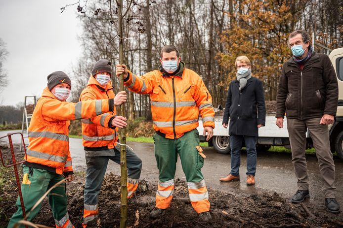Wingene gaat voor 14.600 extra bomen tegen eind 2024