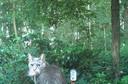 In bijna alle Winterswijkse tuinen legden de camera's ook minder wilde zoogdieren vast, zoals deze jagende kat.