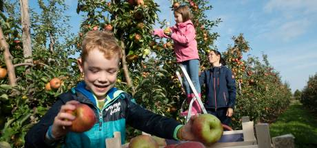 Na het kersen plukken nu appels plukken in de boomgaard