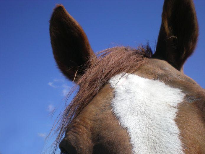 Uitbreidingsplannen van paardenhouderijen in Waalre moeten voorlopig de ijskast in.