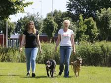 Culemborgse loopt met twee honden naar Roemenië om zwerfhonden te redden