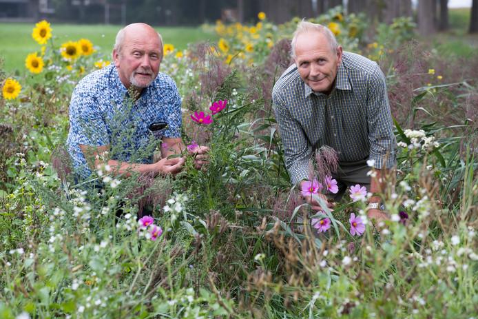 Door landjepik voor de patrijs, mogen Theo (l) en Ben Wichers Schreur al op vijftien lapjes grond kruiden inzaaien.