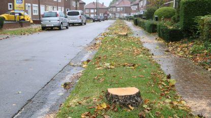Inwoners Landen ongerust over veelvuldig kappen van bomen in bepaalde straten