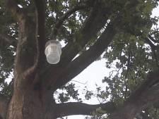 Heusden hangt vallen in bomen tegen jeukrups