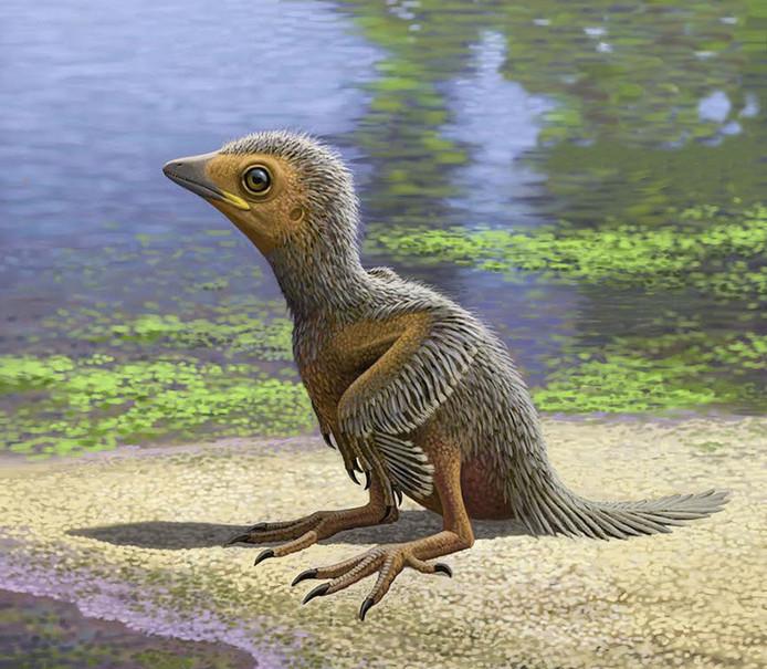 Het kuikentje kroop 127 miljoen jaar geleden uit het ei, maar leefde niet lang.
