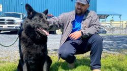 Bouwvakker redt stikkende hond die met baasje vastzit in file