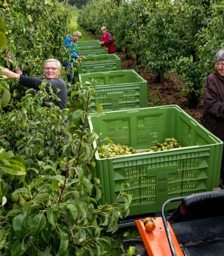 Dikkie en Ank plukken peren in Veessen voor het goede doel: 'Je betekent iets voor een ander en het houdt je fit'
