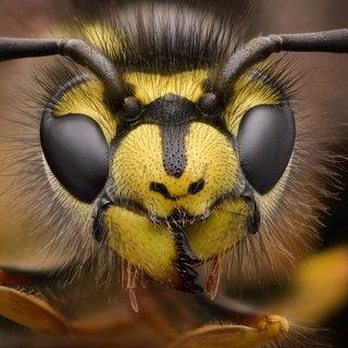 snelle-afname-insecten-kan-%E2%80%98rampzalig%E2%80%99-uitpakken-voor-de-natuur-stelt-nieuwe-studie