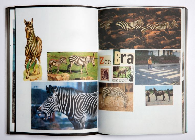 Dierenboeken voor Jaap Zeno Anna Julia Luca. Beeld