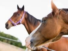 Besmettelijke paardenziekte uitgebroken op manege De Treekhoeve