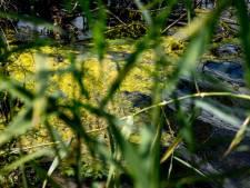 Botulisme in sloot Schelluinen