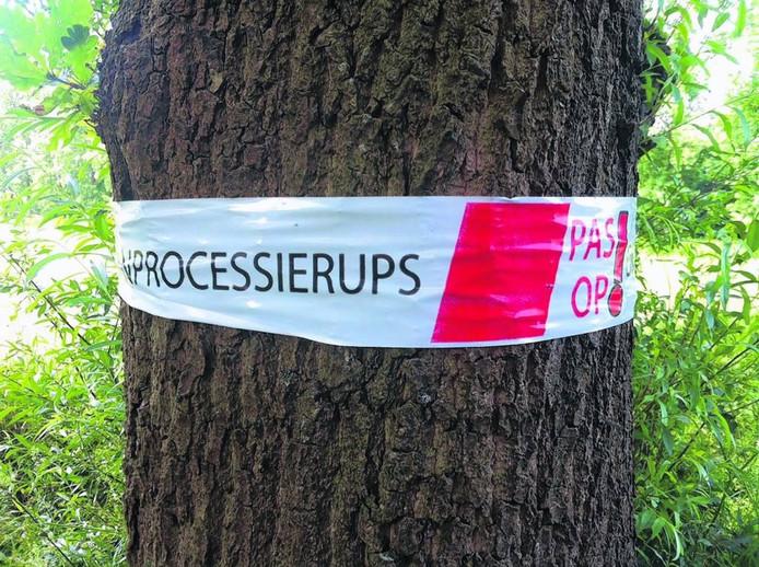 In Etten-Leur zijn rondom de eiken rood-witte linten gespannen als waarschuwing voor de aanwezigheid van de eikenprocessierups. foto Ralph van Wolffelaar